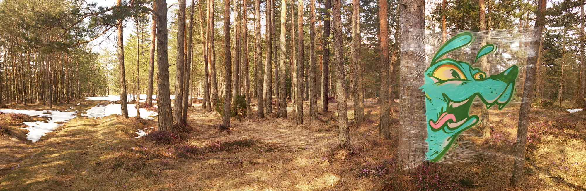 Junk cellograff panorama